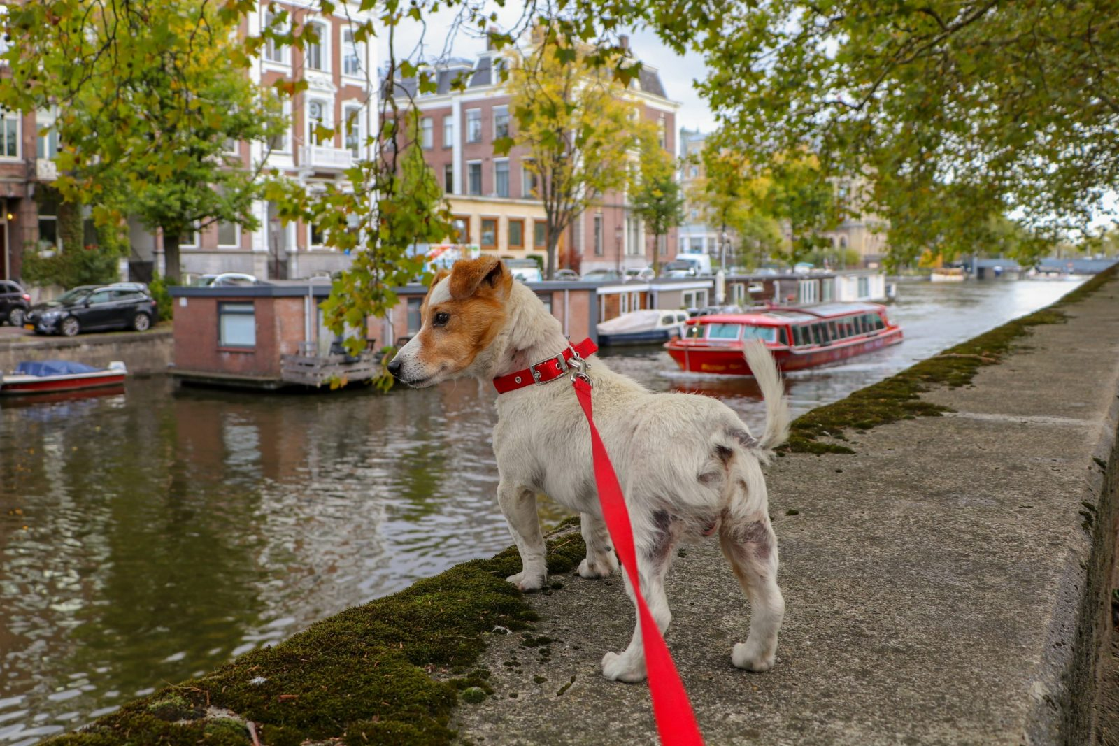 Dog at the Amsterdam canals by Marieke Koenders
